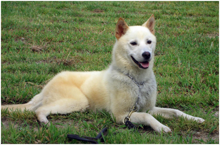Pet Names For White Dogs