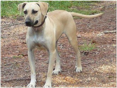 Southern Hunting Dog Breeds