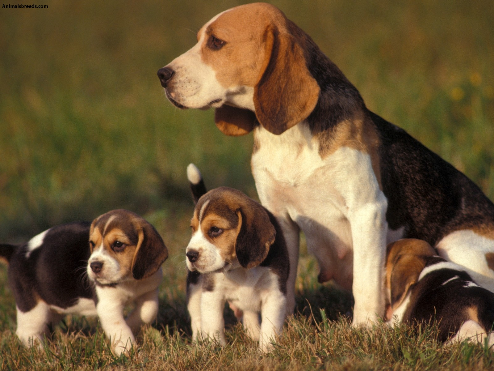 Great Small Outdoor Dogs