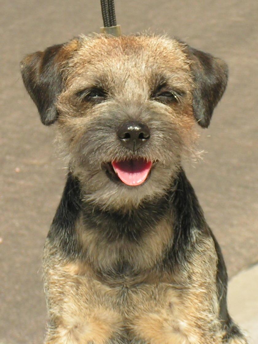 Little Dog Rescue England
