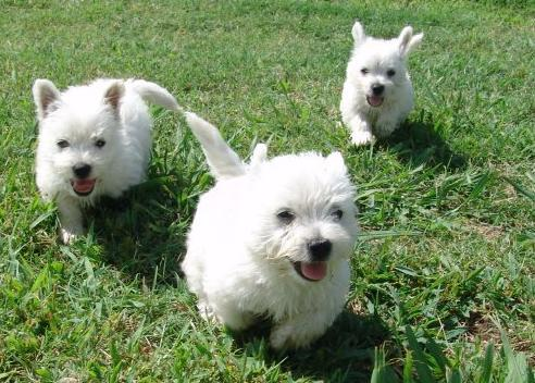 Trained Dogs For Sale Orlando