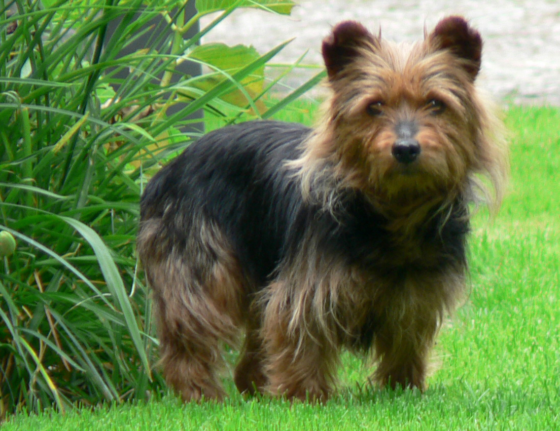 Hypoallergenic Breeds Of Small Dogs