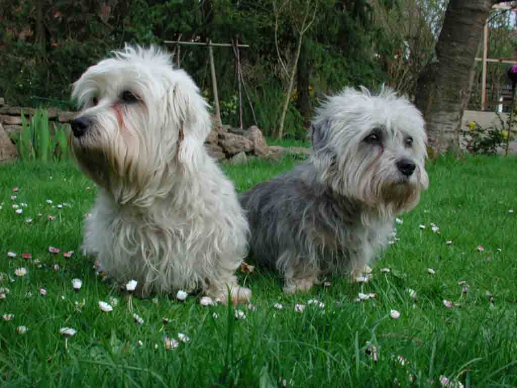 What Does Akc Mean Dog Breeds