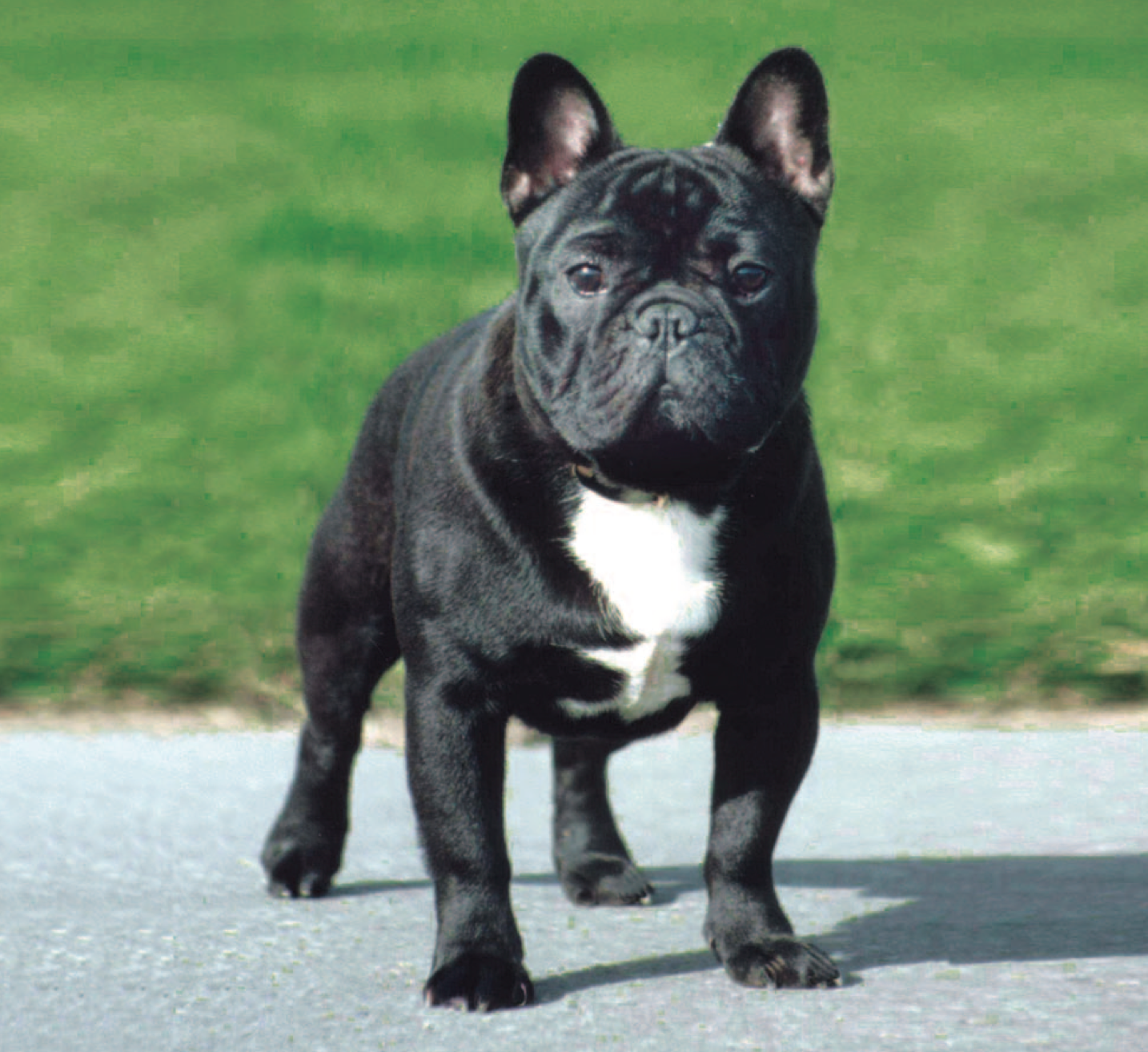 Top  Dog Breeds In France