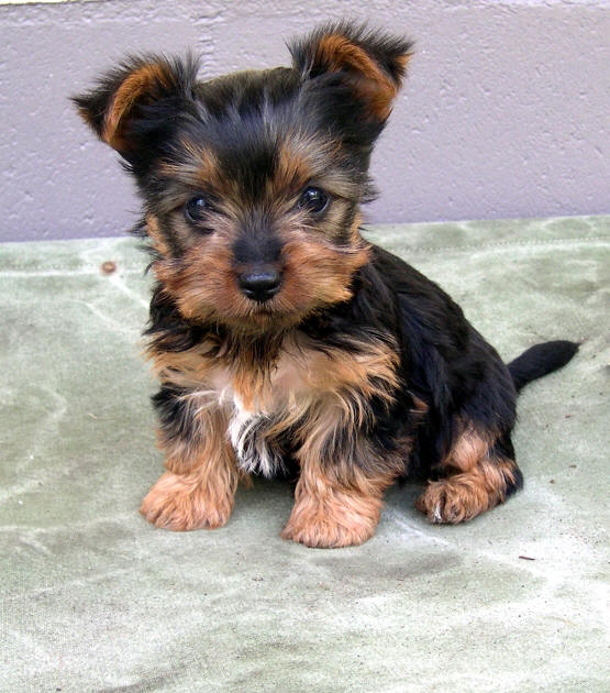 Best Small Dog Food Aus