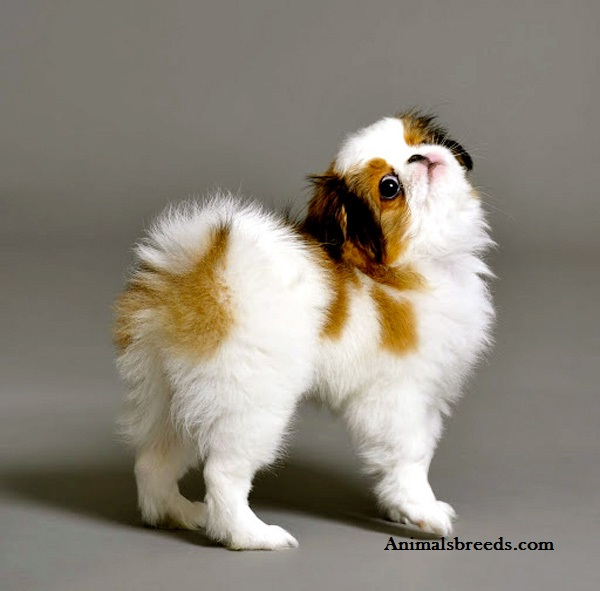 Picture Of Anal Glands Dog