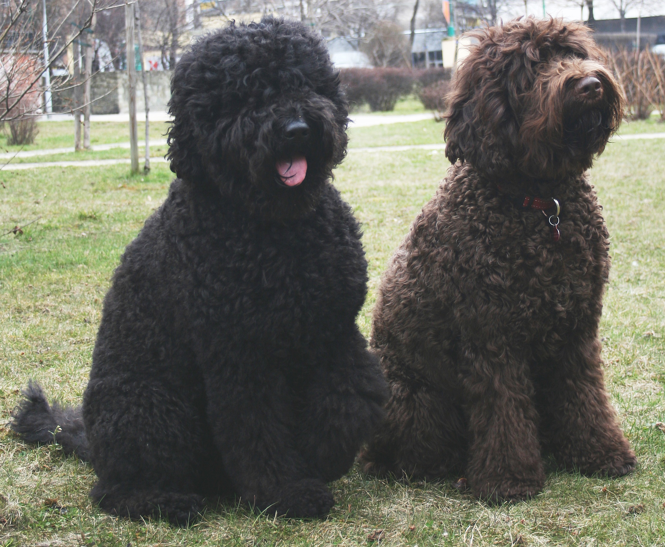 Dogs With Curly Hair Names