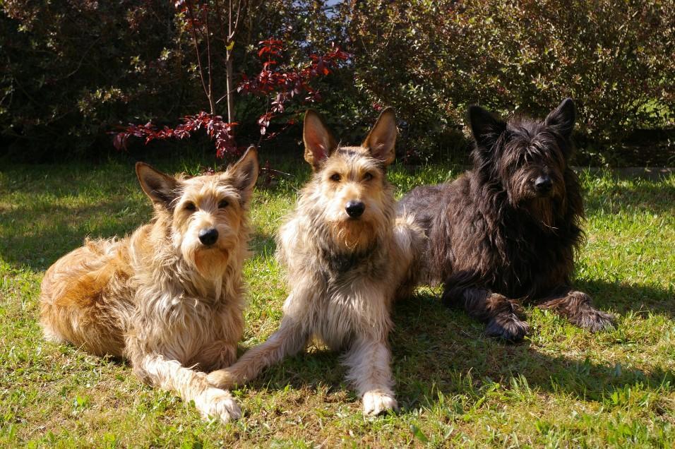 Rare Dog Rescue