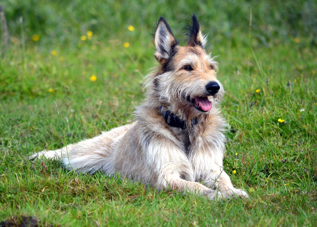 Physical Characteristics Of Dog Breeds