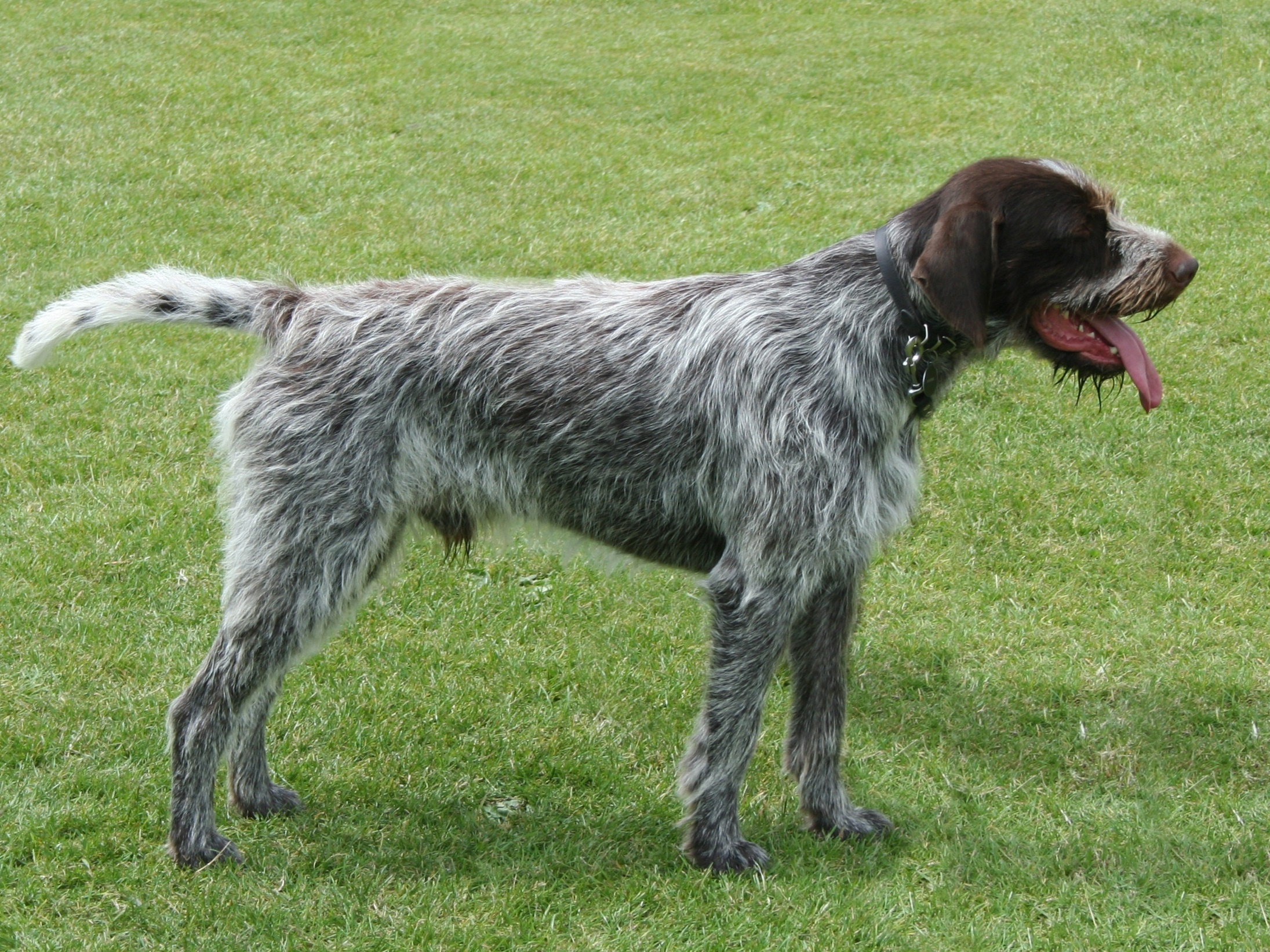 Best Breed For Catch Dogs