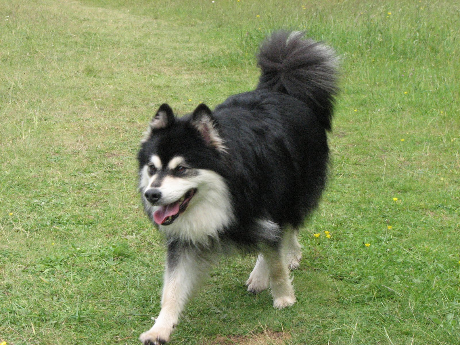 Dog Breeds In Northern On