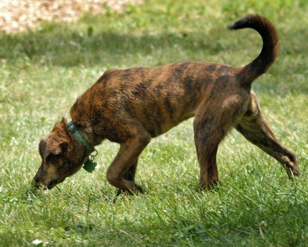 Best Female Hound Dog Names